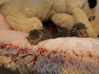 20162609-Meerdere-kittens-gedumpt-in-Zwijndrecht-Tstolk