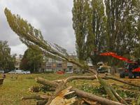 Dertien bomen gekapt