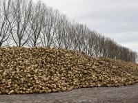 Suikerbieten Zuidhaven Dordrecht