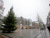 20192811-De-kerstbomen-zijn-weer-geplaatst-in-Dordrecht-Tstolk