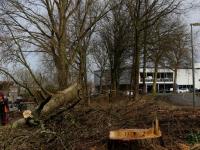 Bomenkap hoek Mijlweg Laan dv Naties gestart