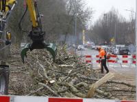 Dubbelsteynlaan Oost afgesloten vanwege bomen snoeien