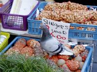 Duif markt
