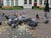20172205 Geen duiven voeren op Vrieseplein Dordrecht Tstolk 002
