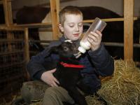 Jong geitje met fles groot gebracht