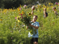 Bloemen plukken Provincialeweg Dordrecht