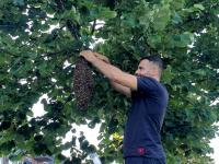 Imker verwijdert bijennest op Leerpark