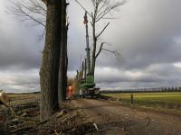 Bomen Zeedijk gekapt na ziekte Dordrecht