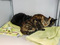 Katten gedumpt Zwijndrecht