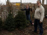 Kerstbomen 'overzomeren' in Groeituinen