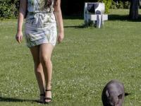 Dewy met mini varken Koeienveld Dordrecht