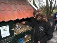 20091102-konijn-terug-bij-kinderboerderij-capelle-aan-de-ijssel-thymen-stolk_resize