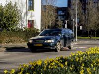Narcissen vol in bloei Prins Julianaweg Dordrecht
