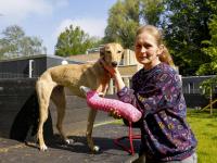 Louterbloemen op zoek naar eigenaar gespalkte hond Dordrecht