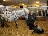 Minipaardje Silver bevallen van veulentje Stadsboerderij Weizigt Dordrecht