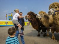 Circus Maximum in Dordrecht
