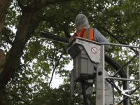 Eikenprocessierupsnesten verwijderd Provincialeweg Dordrecht
