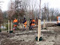Nieuwe bomen langs nieuwe weg Admiraal de Ruyterweg Dordrecht