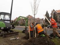 Bomen geplant aan de Oranjelaan Dordrecht