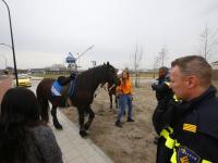 Paard op hol geslagen , meisje heeft hofdwond