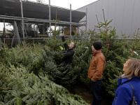 20170212-Op-zoek-een-de-perfecte-kerstboom-Tuinwereld-Dordrecht-Tstolk-001