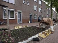 Wethouder plant plantjes Houthavenplein Dordrecht