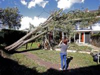 Achtentwintig meter hoge boom valt op woonhuis