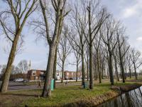 Gemeente gaat bomen snoeien