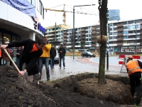 20092002-laatste-boom-geplant-spuiboulevard-dordrecht-ad-thymen-stolk-002_resize