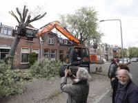Stormschade boom op dak Sophiastraat Dordrecht