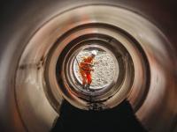 Aanleg Faunatunnel N3 ter hoogte van toerit Copernicusweg Dordrecht