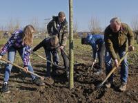 20182202-Wethouder-Kees-Koppenol-plant-namens-de-gemeente-een-boom-Park-Noordhoekse-Wiel-Papendrecht-Tstolk-003