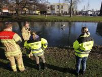 Dierenambulance en brandweer helpen zwaan